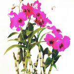 Orchidées Bonafos